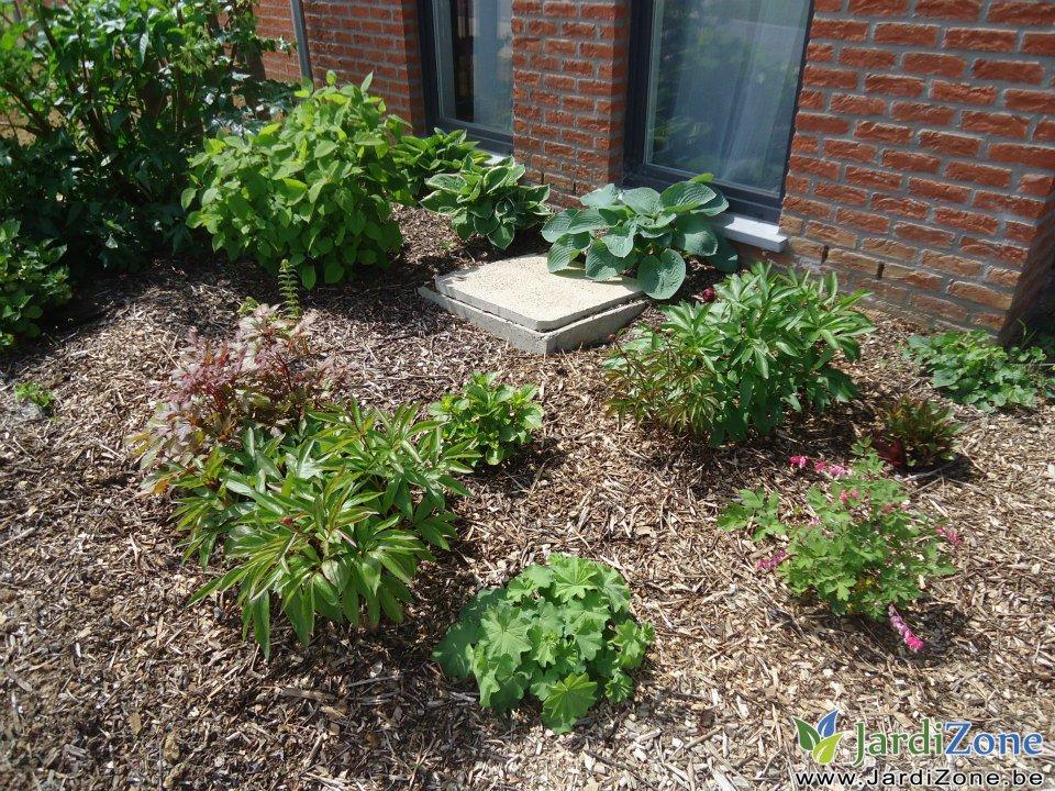que planter dans un sol argileux page 2 jardizone. Black Bedroom Furniture Sets. Home Design Ideas