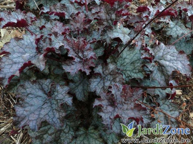 amethyst mist_640x480.jpg