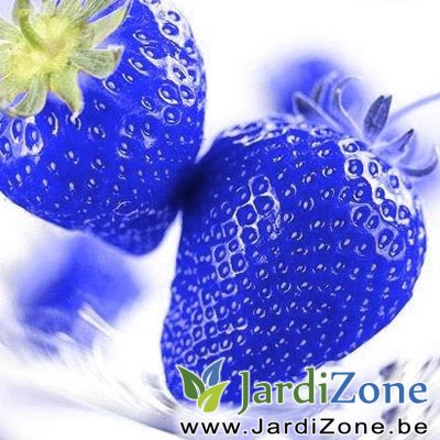Hot-50-PCS-Blue-Rare-Fruits-And-Vegetables-font-b-Strawberry-b-font-Seeds-Home-Garden.jpg